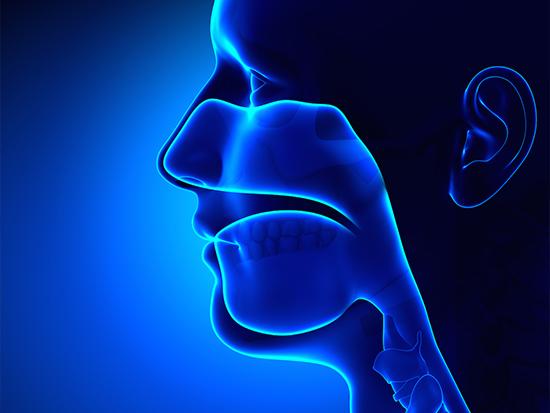 Ear, Nose, Throat Doctors